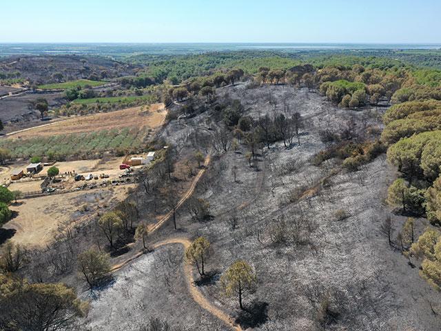 Nos investigations en incendie de forêt